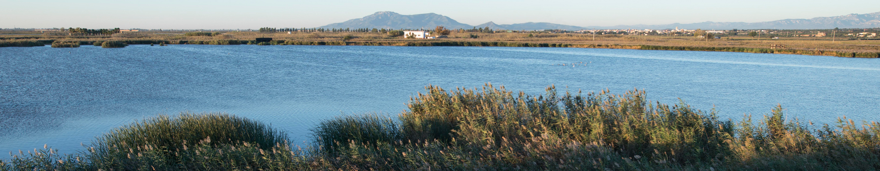 The birds and the rice, natural pathway through Ebro Delta Natural Park