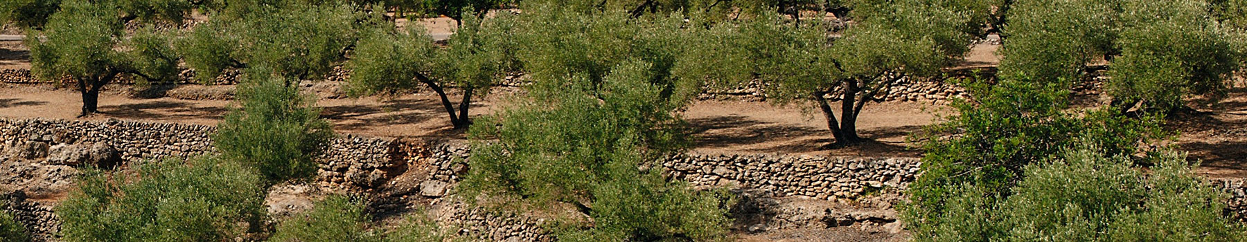 Los jardines de olivos, ruta por el interior de l'Ampolla