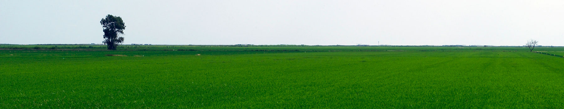 Les oiseaux et le riz, sentier dans le Parc Naturel du Delta de l'Èbre
