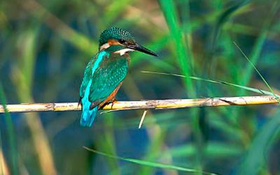 Observation ornithologique